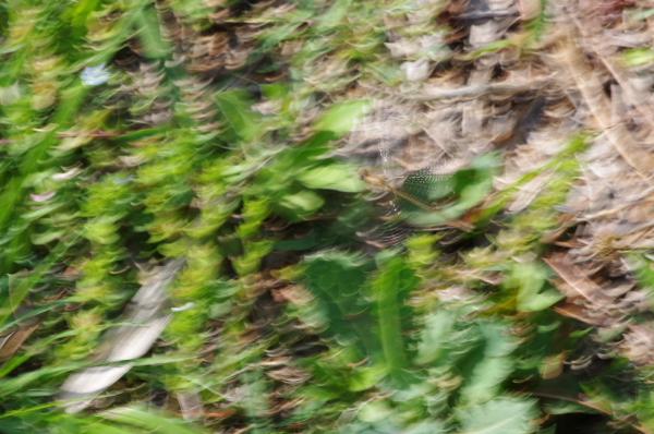 2011_04_24 14_48_57.jpg