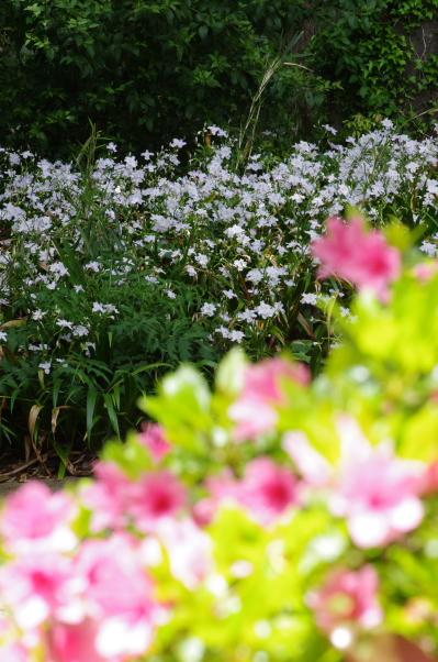 2011_04_29 11_33_37.jpg