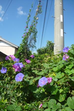 2012_10_27 09_52_23.jpg