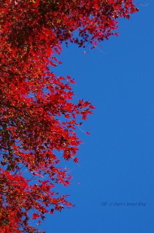 2012_11_25 10_55_03.jpg